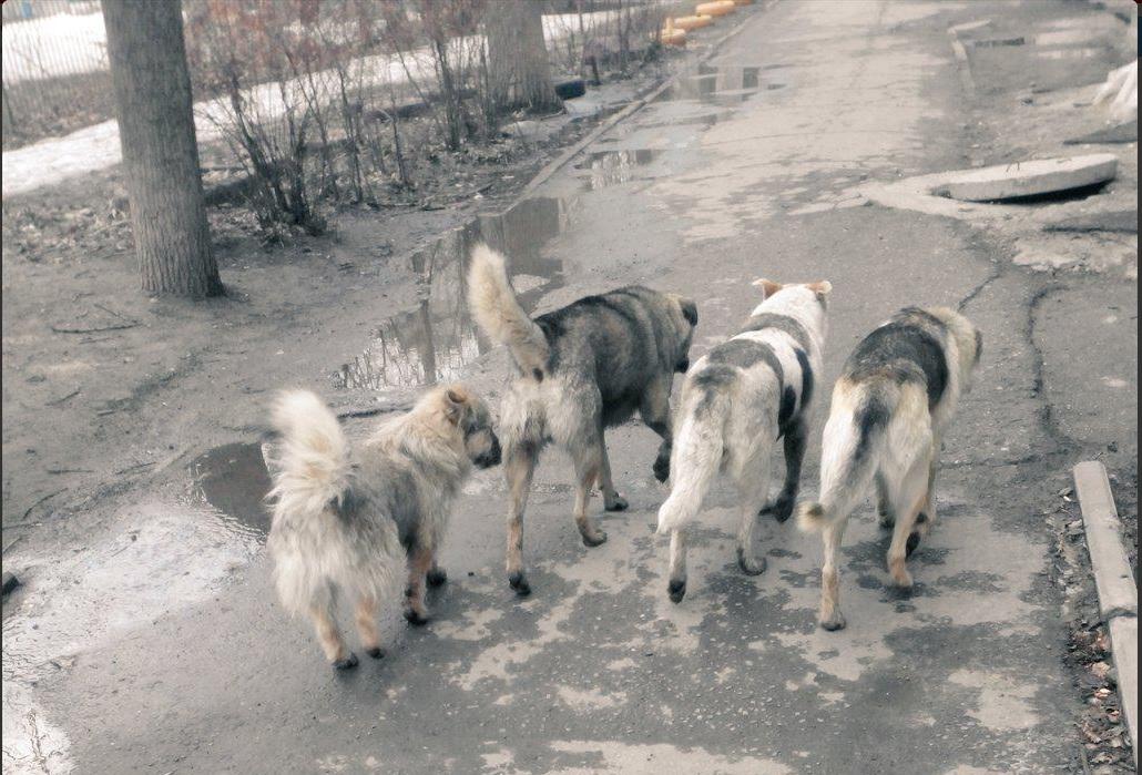 собачки 3