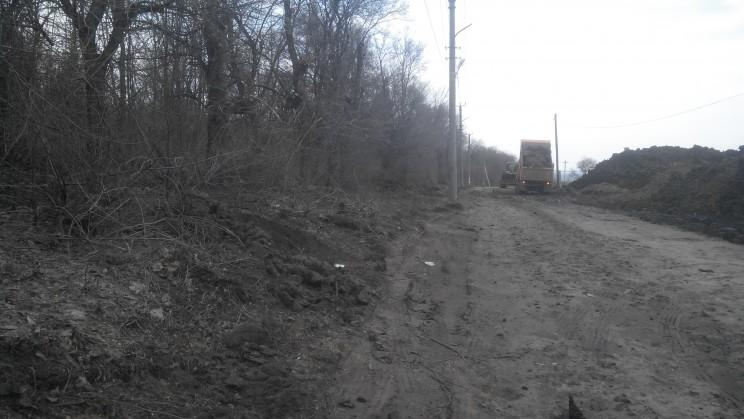 Посадки вдоль дороги уничтожены и спилены