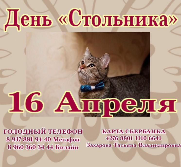 день стольника кошкин дом