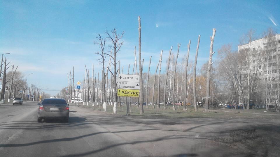Что стало с деревьями на Нижней террасе или психопатология администрации Ульяновска