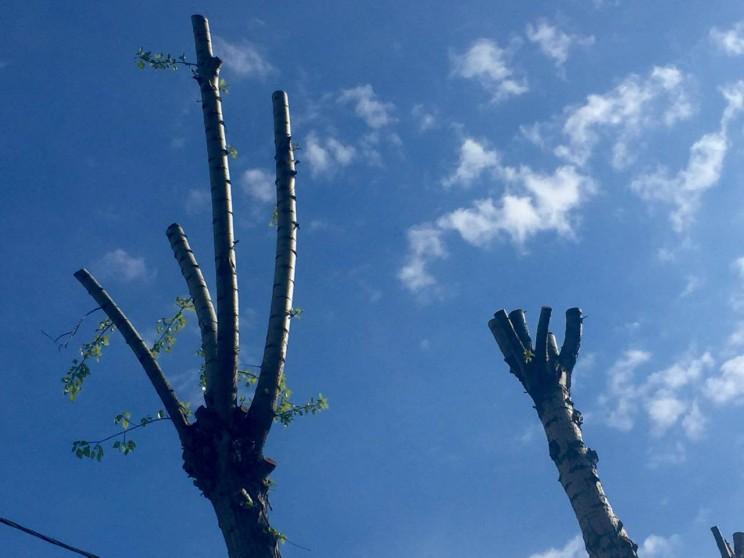 обрезанные деревья на Нижней и в Железнодорожном районе -1