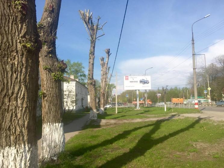 """""""Омоложенные"""" тополя недалеко от входа в парк """"Винновская роща"""" на пр. Гая в Ульяновске"""