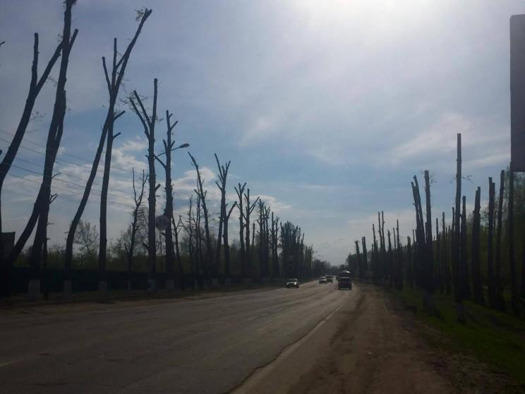 Деревья вдоль Димитровградского шоссе на Нижней террасе в Ульяновске, 6 мая 2016 года