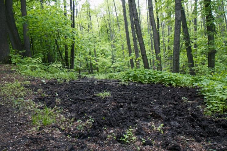 Место, где копают дождевых червей
