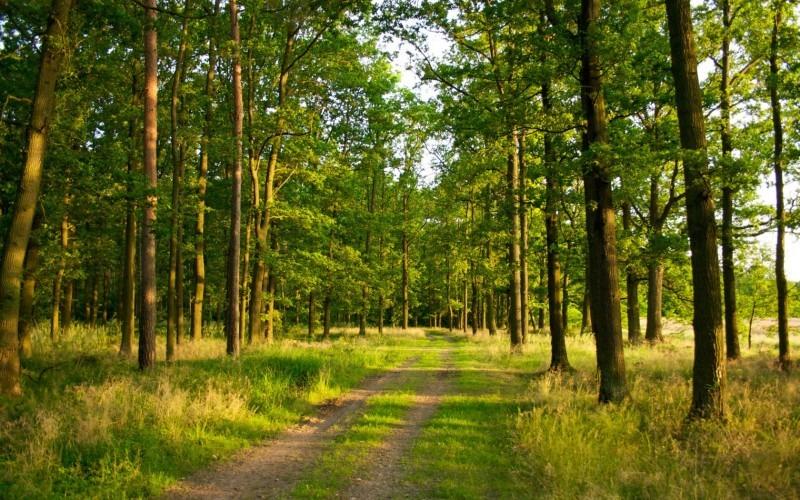 Министерство сельского, лесного хозяйства и природных ресурсов Ульяновской области плохо следит за лесами
