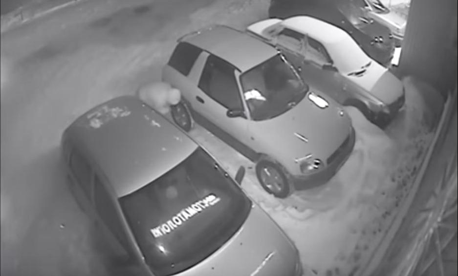 Резня на Нижней террасе заинтересовала прокуратуру Заволжского района Ульяновска