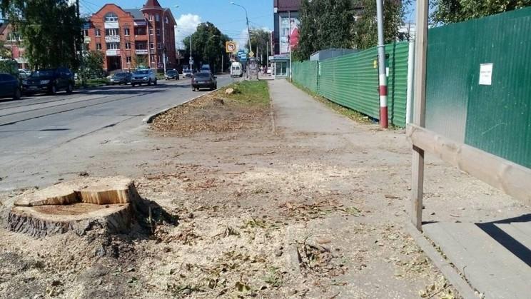 Деревья на Радищева снесли - 1