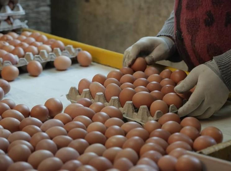 «Симбирская птицефабрика» планирует производить 800-900 тысяч яиц в месяц