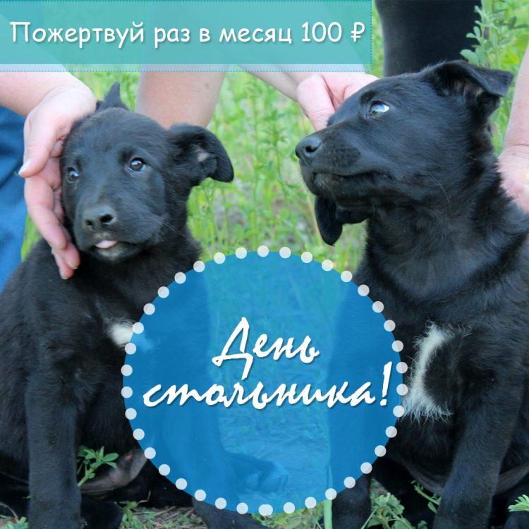 Доброе дело: как поддержать бездомных собак Ульяновска суммой в 100 рублей