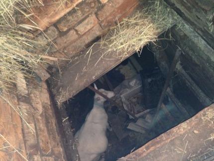 Коза спасатели