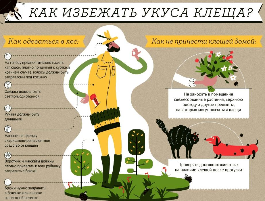 Роспотребнадзор по Ульяновской области: «Клещевой вирусный энцефалит и меры его профилактики»